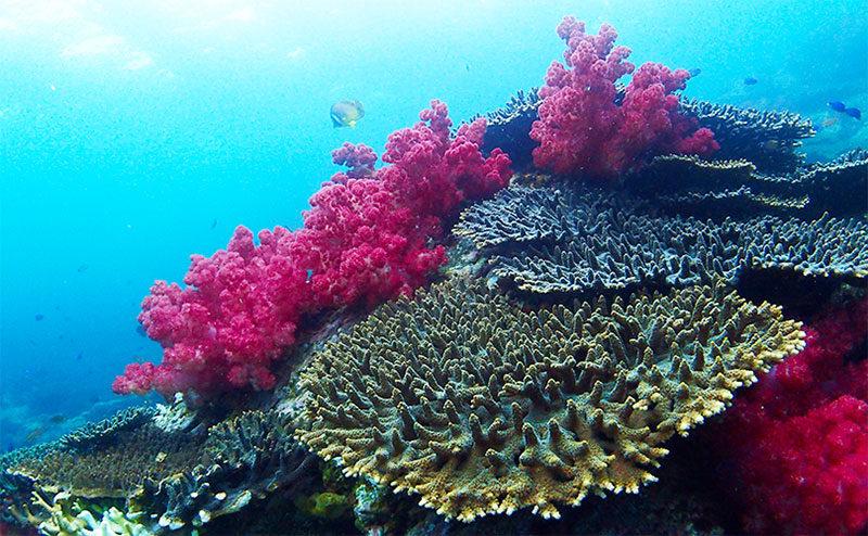 宇和海海域公園のサンゴの森