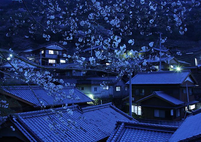 特別賞「宵桜咲く石垣の里」